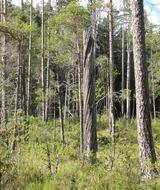 Практический семинар «Ценные леса Ленинградской области»