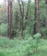 РОО «Новый экологический проект» выпустила ролик про сохранение лесов высокой биологической ценности.