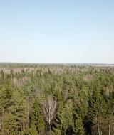 Пригородные леса — недооцененный ресурс