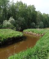 Пресс-тур 27 июня: Пригородные леса и ООПТ в Ленобласти под бульдозером «ковровой застройки»