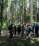 Экологи предлагают объединить пригородные леса вокруг Петербурга в зеленую сеть, которая свяжет город и Ленинградскую область