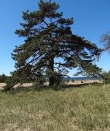 """РОО """"Новый экологический проект"""" приглашает посадить дерево"""