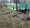 В Петербурге становится больше деревьев