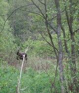 Экотуризм в заказниках -- источник повышенной опасности для природы