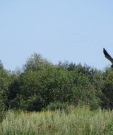 Росприроднадзор проверит сохранность краснокнижных видов в «Вепсском лесу»